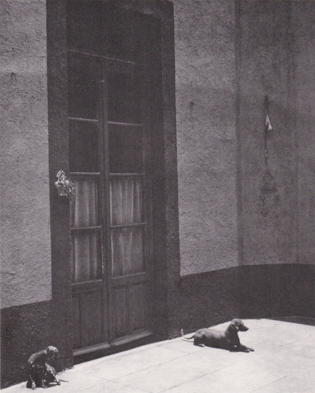 Lola Alvarez Bravo cani fuori dalla stanza di Frida Kahlo